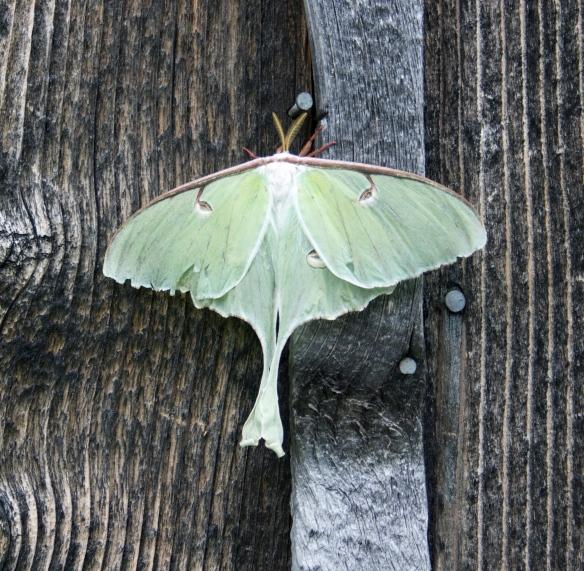 moth 02