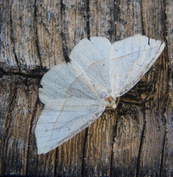 moth 07