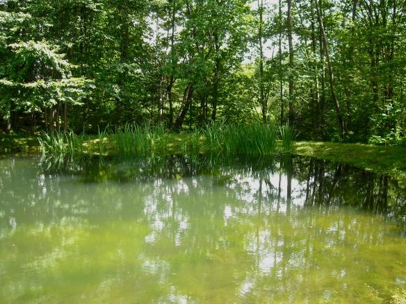 pond 01