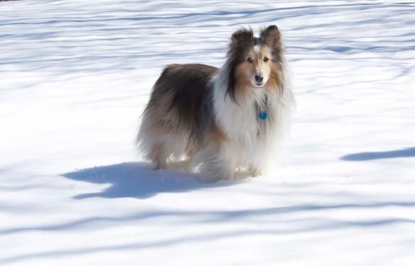 Sammy in snow